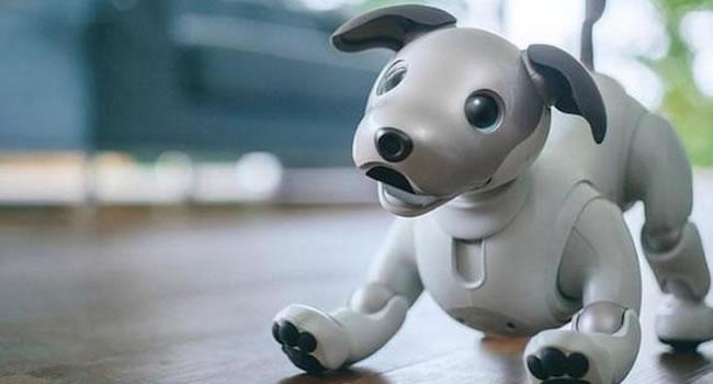 el perro robot aibo